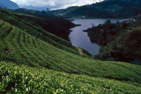 Нагорья Центральной Шри-Ланки